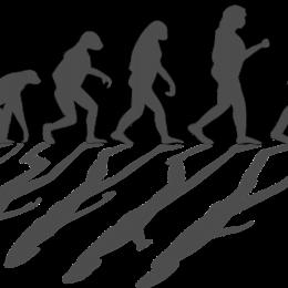 evolution-1295256_1280